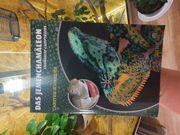 Jemen Chamäleon mit Terrarium