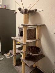 großer Katzen Kratzbaum