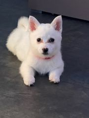 Welpe Hund 3 Monate alt