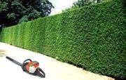Gartenpflege Hecken Büsche Bäume Rasen