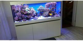 Sonstige Sammlungen - Meerwasseraquarium EHEIM Inspiria Marine mit