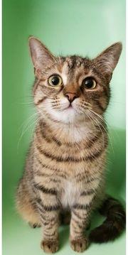 Katzenmädchen 9 Monate jung