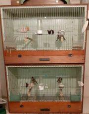 Stiglitz Käfig