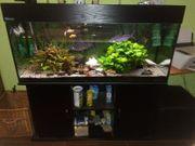 Aquarium - Komplett - mit Zubehör
