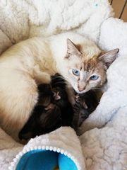 Tilda Katze aus dem Tierschutz