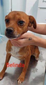 Belinda 6 Jahre sucht ihre