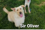 Der zuckersüße Sir Oliver sucht