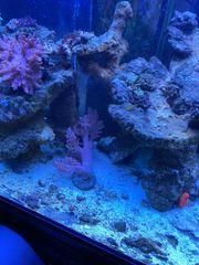 Meerwasser Aquarium 400l