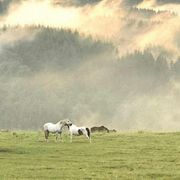 Rentnerplatz Pferde