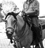 Reitbeteiligung für Westernpferd gesucht