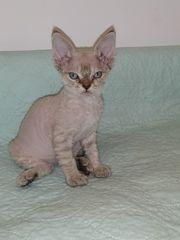 Baby Katzen klein und verschmust
