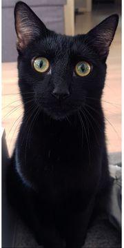 SUCHE Katze Kater 5-6 Monate