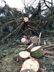 Baumfällung Bäume fällen als HOBBY