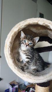 Katzen baby s 8 Wochen