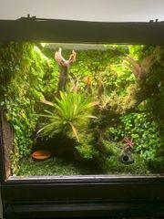 Voll bepflanztes Regenwaldterrarium Frösche wenn