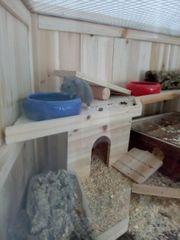 Hamster junge abzugeben