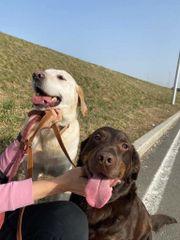 Labrador Mutter und Sohn 9