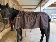 Pferde Outdoor Decke 150g