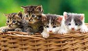 Suchen Baby Katze