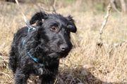 Mazsi fröhlicher Hundejunge ca 6