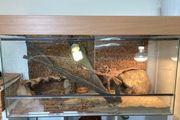 Staterset Glasterrarium inklusive Zubehör