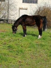 Hallo ich verkaufe eine pony