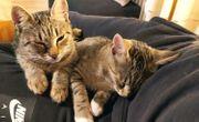 Sena Sittah Kinderliebes Traumkatzenpaar sucht