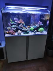 Eheim Incpiria 300 Meerwasseraquarium mit