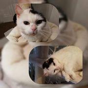 Katze EKH kastriert Notfall Flöckchen