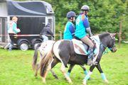 Partbred Isländer Mix Pony