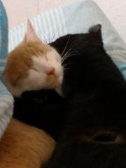 Kater 2Jahre Katze 1Jahr