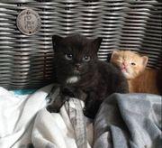 Zu verschenken - Kitten können ab