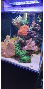 Meerwasser Aquarium BlueMarine komplett