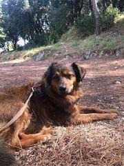 Liebevolle Hundebetreuung HuTa in Höhenkirchen-Siegertsbrunn