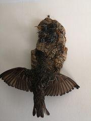 Vogelpräparate