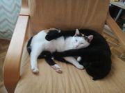 Katzenpärchen Hope und Merlin suchen