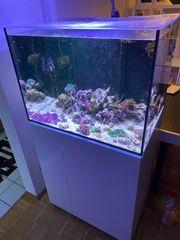 Meerwasser Meerwasseraquarium komplett