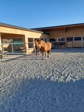 HIT Aktivstall Einstellplätze: Kleinanzeigen aus Brederis - Rubrik Pferdeboxen, Stellplätze