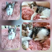 Kitten Baby Kater Flocke geimpft
