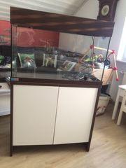 Tolles 128 Liter Aquarium von