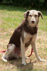 Lucian 4 Jahre - Mischling - Tierhilfe