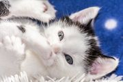 Kaiserslautern Katzensitter gesucht Im Nebenjob