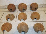 Kokosnussschalen zu verkaufen