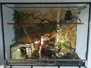 4 Kornnattern Terrarium mit Unterschrank
