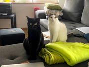 Schöne Katzen suchen ein Zuhause
