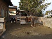 Einstellplatz für pony oder kleinpferd