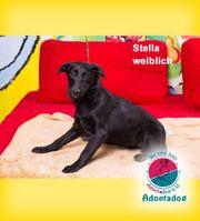 Stella - schwarz ist das neue