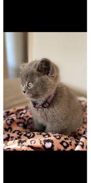 Wunderschöne Kitten suchen liebevolles Zuhause