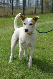 SPIKE Terrier Mischling kastriert SGB