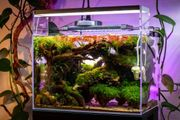 Hardscape für 45P Aquarium